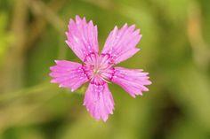 'Kleine pinke Blüte' von toeffelshop bei artflakes.com als Poster oder Kunstdruck $19.41