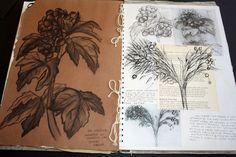 Art Sketchbook - observational drawings of organic forms // Art student portfolio A Level Art Sketchbook, Sketchbook Layout, Sketchbook Ideas, Natural Forms Gcse, Natural Form Artists, Artist Research Page, Art Alevel, Observational Drawing, Sketch Inspiration