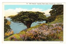 Carmel Bay California Vintage Postcard by PicturesFromThePast