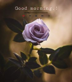 G Morning, Good Morning Roses, Good Morning Images Flowers, Morning Coffee, Cute Babies, Plants, Baby, Plant, Baby Humor