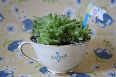 DIY : Succulents in a Tea Cup (by Yesterday on Tuesday)