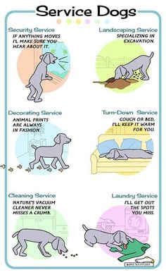 Service Dogs! LOL In this case, we don't only have one service dog, all 4 of our dogs are service dogs! LOL