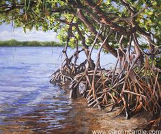 """""""Mangrove Haven"""" Oil 30"""" x 36"""" Original painting costs $4,500 but a giclee print can be ordered in any size."""