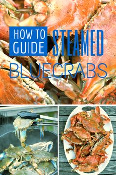 Pop open a Natty Bo and get out the steaming basket - here& how to steam Maryland Blue Crabs at home. Shellfish Recipes, Seafood Recipes, Cooking Recipes, Seafood Dishes, Fish And Seafood, Blue Crab Recipes, Primal Recipes, Healthy Recipes, Steamed Crabs