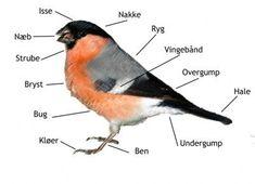 tegn en fugl - Google-søgning