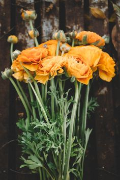Orange Blooms – By the Sea