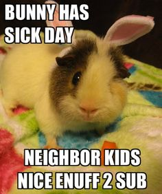 Easter Bunny Guinea Pig Picture