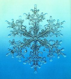 A broach of icy lace . . .