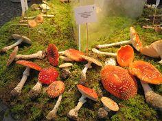 Punane kärbseseen - Veeseire Dryad's Saddle, Mushroom Pictures, Carrots, Stuffed Mushrooms, Vegetables, Food, Nature, Stuff Mushrooms, Naturaleza