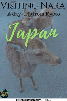 If you're visiting Nara in Japan, here's some places you shouldn't miss out on! Don't just visit the adorable deer, build the perfect Nara itinerary! Japan Travel Tips, Travel And Tourism, Thailand Travel, Asia Travel, Travel Destinations, Travel Hacks, Wanderlust Travel, Backpacking Asia, Nara