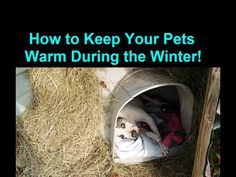 How to Winterize / Heat a Dog House and Keep it Warm Inside. How to get a dog house ready for winter. This was done because those crappy Igloo dog houses … Pallet Dog House, Build A Dog House, Dog House Plans, Winter Dog House, Warm Dog House, Dog Igloo, Igloo Dog House, Dog House Heater, Outside Dogs