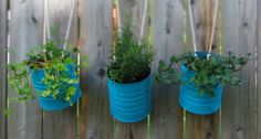 Tin Can Hanging Garden Planters . whilst metal will eventually rust in the outdoors, upcycling tin cans is a cheap and cheerful way to make your own short-term planters, especially for kids gardens. Hanging Herbs, Diy Hanging, Hanging Pots, Hanging Gardens, Hanging Flowers, Hanging Baskets, Tin Flowers, Flower Pots, Flower Fence