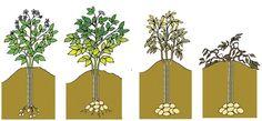 quand-récolter-des-pommes-de-terre-sur-un-balcon Vegetable Garden, Container Gardening, Planters, Home And Garden, Outdoor Structures, Green, Blog, Diy, Angora