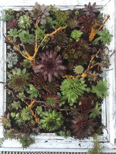 Floral Wreath, Wreaths, Plants, Home Decor, Succulents, Homemade Home Decor, Door Wreaths, Flora, Deco Mesh Wreaths