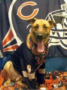 Ready to tailgate!  Wilson Owens, a Bil Jac dog.  #BilJac #Dog #SportsDogs