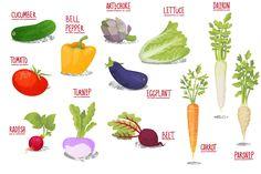 Vector Vegetables by shizayats on Creative Market