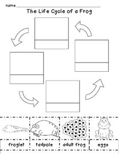 ... Worksheet further Frog Life Cycle Cut And Paste. on frog unit
