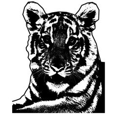 Monochrome image of tiger