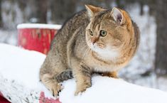 How to Help Outdoor Cats Stay Warm and Safe in Winter