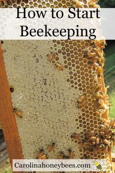 How to Start Beekeeping for honey on your homestead or in your backyard. #beekeeping #honey #beehive