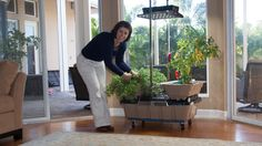 Pictures of the SimGar Container Gardening System