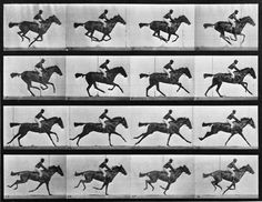 Animal Locomotion: Plate 626 (Galloping Horse) *Sophie like