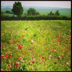 Gorgeous view - a pretty meadow of wild flowers