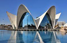 L'Oceanogràfic Valencia, Spain. Interesting building, fabulous aquarium!