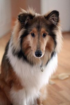 This Collie's eyes are mesmerizing, so sweet!