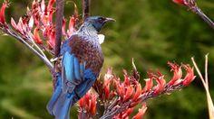 Image result for tui Nativity, Bird, Photos, Animals, Image, Pictures, Animales, Animaux, The Nativity
