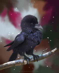 Pocket Raven