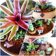 Facebook.com/celtapresentes Succulents, Facebook, Plants, Gifts, Celtic, Flora, Succulent Plants, Plant, Planting