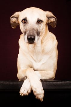 500px / Tell me your dreams by Elke Vogelsang