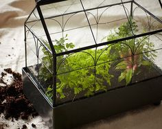 Create a Closed Terrarium in 7 Easy Steps for the Gardener on Your Christmas List.