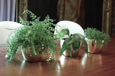 house plants...baby tears, maidenhair fern, staghorn fern.  baby and stag low indirect lighting!