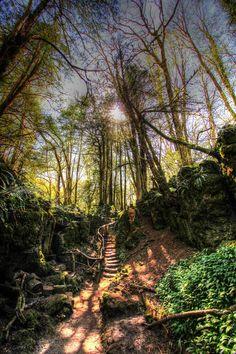 Magical woodland path  Natty Jack's Photography