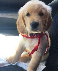 What a cute little passenger!