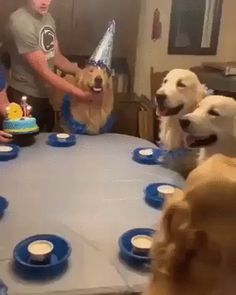 Please say a big Happy Birthday to this beautiful blind baby, Sunny Blue! Here he is celebrating his birthday with all his nugget friends CC: doglove_co-Via Sunny Blue Blind and Blessed on FB. Cute Funny Animals, Cute Baby Animals, Funny Dogs, Animals And Pets, Cute Puppies, Cute Dogs, Dogs And Puppies, Cute Babies, Cute Animal Videos