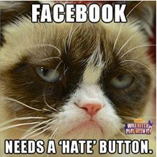 40 Grumpy Cat Memes That You Will Love! - Grumpy Cat - Ideas of Grumpy Cat - 40 Grumpy Cat Memes That You Will Love! The post 40 Grumpy Cat Memes That You Will Love! appeared first on Cat Gig. Grumpy Cat Quotes, Funny Grumpy Cat Memes, Cat Jokes, Funny Animal Memes, 9gag Funny, Funny Cats, Funny Jokes, Funny Animals, Funny Sarcastic