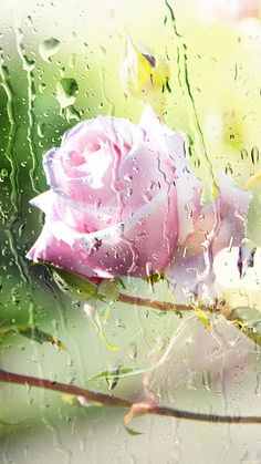 Rose water Galaxy S6 Wallpaper
