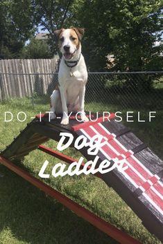 DIY Dog Ladder — Most Improved Dog