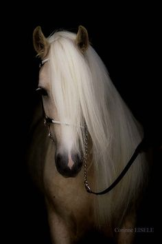 Breathtaking Palomino