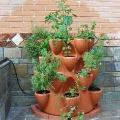 How To Grow Great Herbs