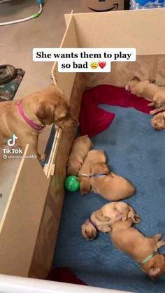 Super Cute Puppies, Baby Animals Super Cute, Cute Baby Dogs, Cute Funny Dogs, Baby Puppies, Cute Little Animals, Cute Funny Animals, Cute Animal Photos, Cute Animal Videos
