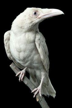 - My list of the most beautiful animals Zoo Animals, Animals And Pets, Cute Animals, Animals Photos, Beautiful Birds, Animals Beautiful, Beautiful Pictures, Funny Bird, Rare Albino Animals