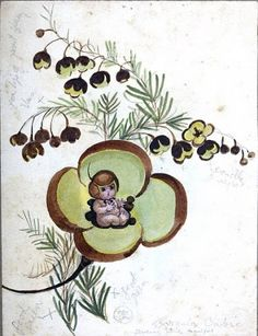 Boronia Baby, colour illustration by May Gibbs. From the collections of the Mitchell Library, State Library of New South Wales www. Aussie Christmas, Australian Christmas, Baby Artwork, Baby Tattoos, Scottie Dog, Aboriginal Art, Australian Artists, Faeries, Vintage Prints