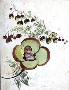 May Gibbs Boronia baby