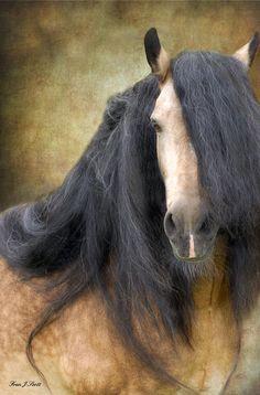 The Stallion Photograph  - The Stallion Fine Art Print