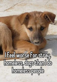 I feel worse for stray, homeless, dogs than I do homeless people
