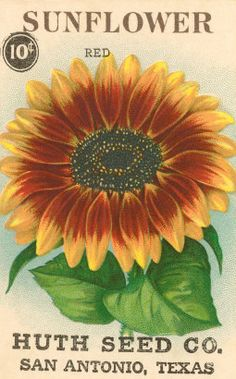 Vintage Seed Pack Label ~ Sunflowers